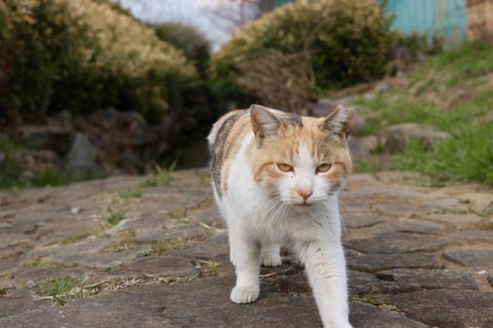 野良猫ちゃんと菜の花。_f0348831_20473291.jpg