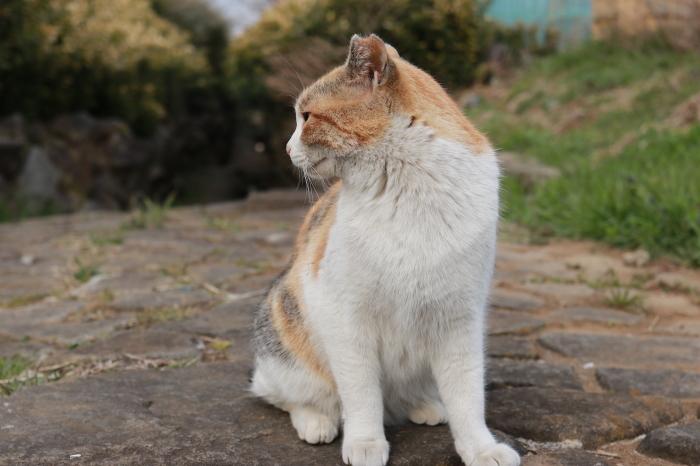 野良猫ちゃんと菜の花。_f0348831_20473403.jpg