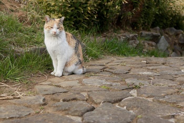 野良猫ちゃんと菜の花。_f0348831_20475223.jpg