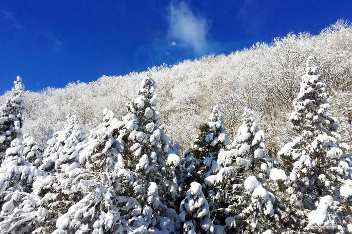 564 鳥取県 ~寝台特急サンライズ出雲の車窓から~_c0211532_14565107.jpg