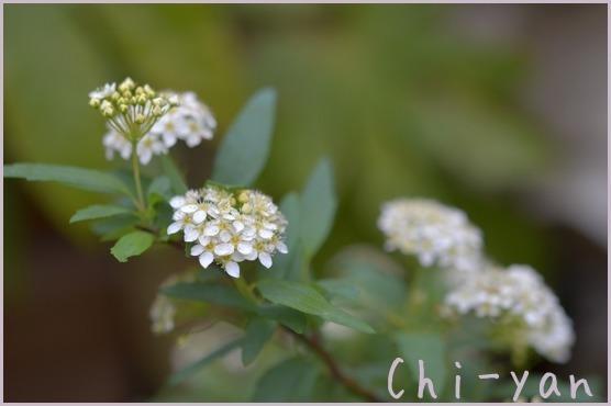 春が来た!!_e0219011_14575914.jpg