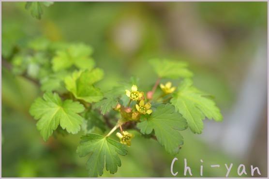 春が来た!!_e0219011_14590012.jpg
