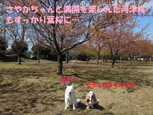 f0121712_06235447.jpg