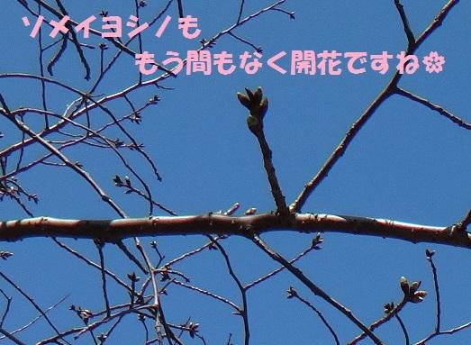 f0121712_06240132.jpg