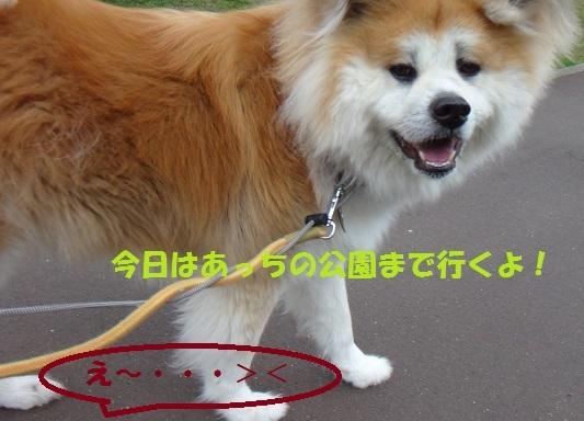 f0121712_06460900.jpg
