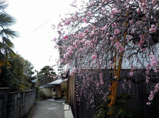 路傍の花、樹々の鳥(150) ~ ちょっとレトロな雰囲気の路地を抜けて ~_b0102572_13273701.jpg