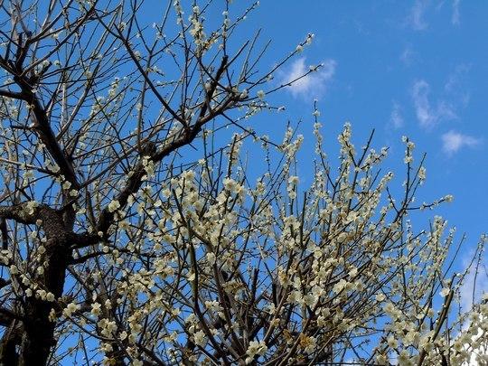 路傍の花、樹々の鳥(150) ~ ちょっとレトロな雰囲気の路地を抜けて ~_b0102572_13283072.jpg