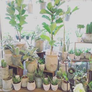 植物入荷_b0209477_18005811.jpg