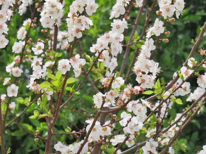 春♪_e0092286_18392032.jpg