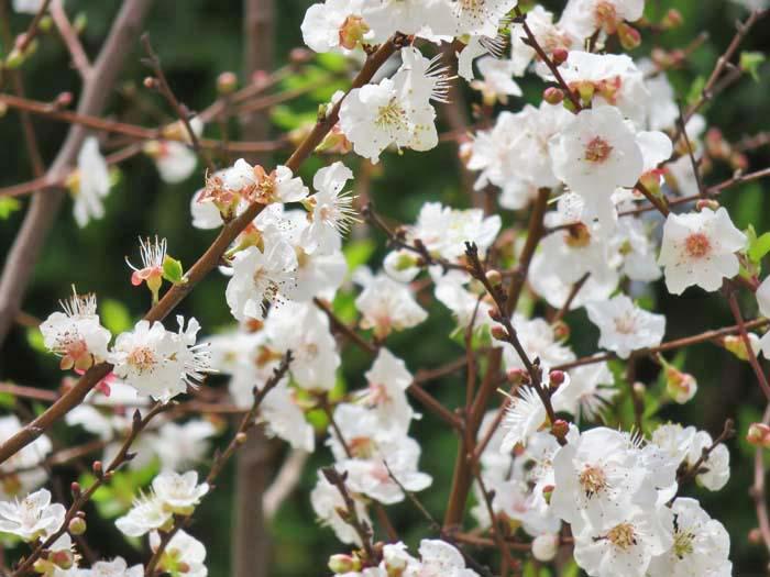 春♪_e0092286_18403985.jpg