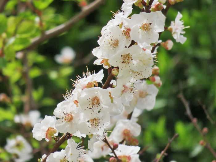 春♪_e0092286_18412560.jpg