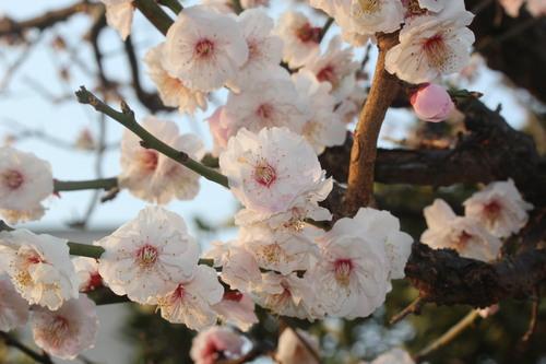 3月19日彼岸_e0094102_1447331.jpg