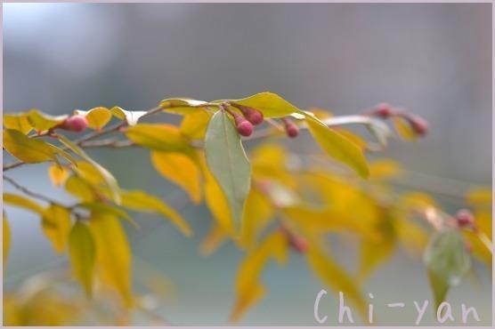 春が来た!!_e0219011_19571868.jpg