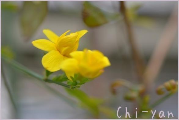 春が来た!!_e0219011_19574551.jpg