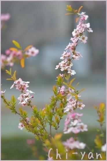 春が来た!!_e0219011_19582074.jpg