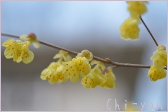 春が来た!!_e0219011_19590884.jpg