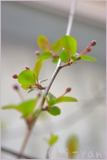春が来た!!_e0219011_19591805.jpg