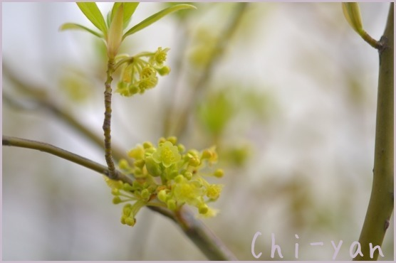 春が来た!!_e0219011_20000228.jpg