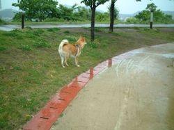 雨の日のお散歩_e0371017_11295431.jpg