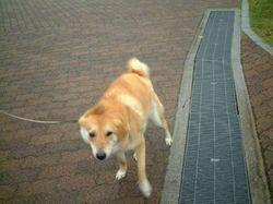 雨の日のお散歩_e0371017_11295530.jpg