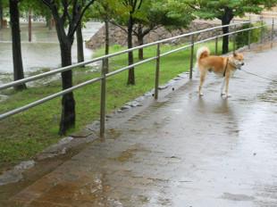 雨の散歩と病院_e0371017_11414659.jpg