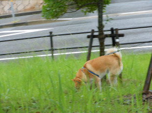 雨の散歩と病院_e0371017_11414663.jpg