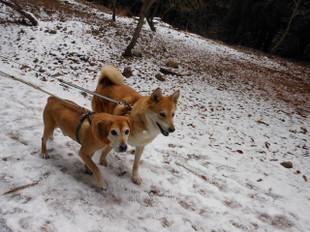 ゴンタも一緒に雪を見に_e0371017_11432151.jpg