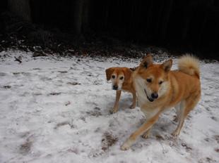 ゴンタも一緒に雪を見に_e0371017_11432182.jpg