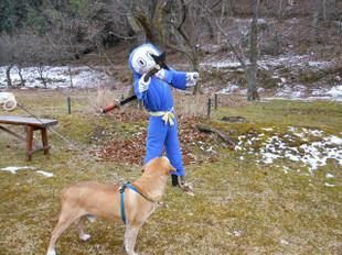 ゴンタも一緒に雪を見に_e0371017_11432249.jpg