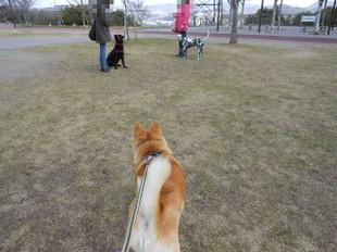 散歩&シャンプー_e0371017_11435298.jpg