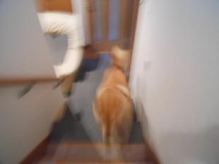階段使ってくれるかな~_e0371017_11460270.jpg