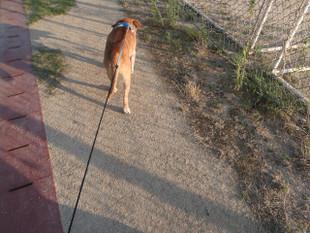 暑いけど散歩は楽しみ~_e0371017_11491223.jpg