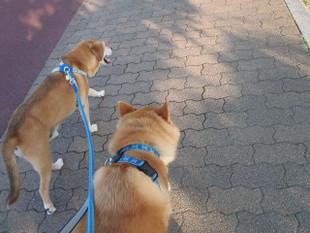 暑いけど散歩は楽しみ~_e0371017_11491248.jpg