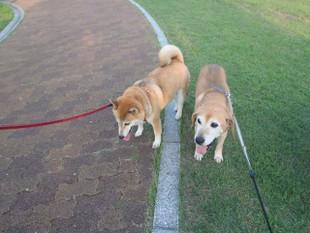 暑いけど散歩は楽しみ~_e0371017_11491260.jpg