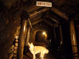 生野銀山へ_e0371017_11500639.jpg