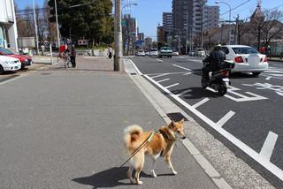 湊川公園_e0371017_11515139.jpg