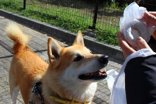 湊川公園_e0371017_11515170.jpg