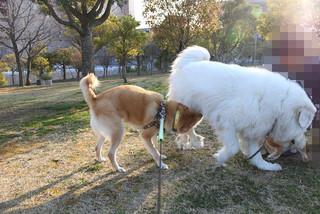 散歩楽しいね♪_e0371017_11515416.jpg