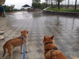 散歩中に大雨_e0371017_11534636.jpg