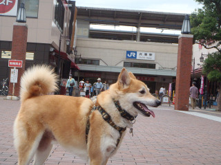 駅前で散歩_e0371017_11535337.jpg