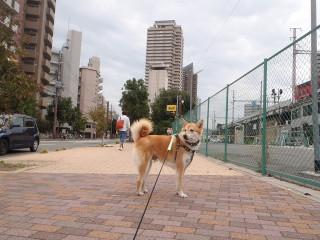 駅前で散歩_e0371017_11535400.jpg