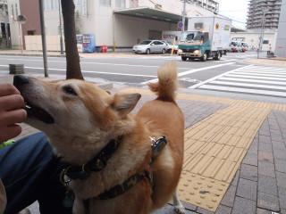 駅前で散歩_e0371017_11535463.jpg