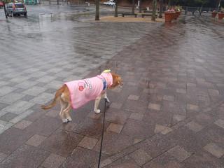 雨やと気分が乗らへん_e0371017_11553202.jpg