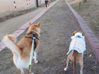 散歩楽しいね_e0371017_11581922.jpg