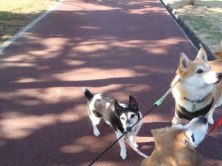 散歩楽しいね_e0371017_11581935.jpg