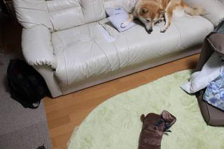 犬の形の湯たんぽ_e0371017_11582719.jpg