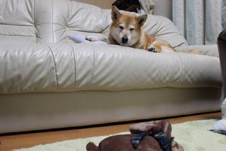 犬の形の湯たんぽ_e0371017_11582720.jpg