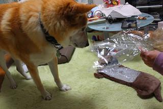 犬の形の湯たんぽ_e0371017_11582784.jpg