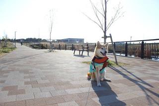 桜と一緒に記念撮影_e0371017_11593128.jpg