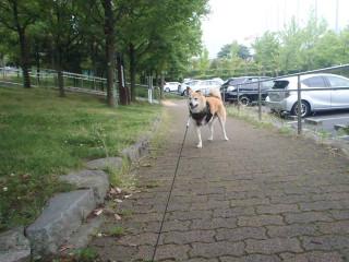 男同士の散歩_e0371017_12000318.jpg